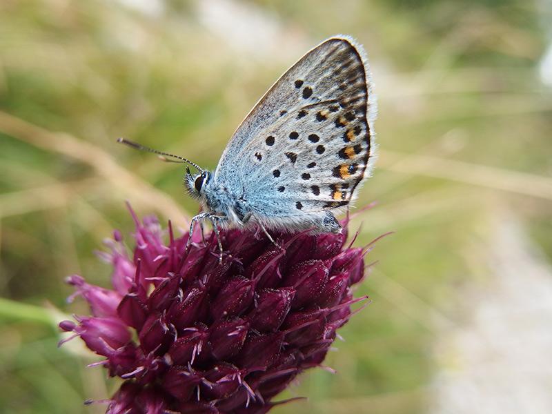 Schmetterling-auf-Blume-